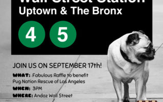Pugs Take NYC Pug Squad Raffle
