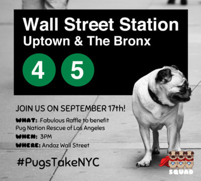 PugsTakeNYC Raffle for Bella