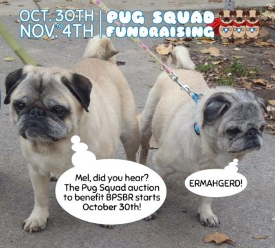 Pug Squad Auction for Buffalo Pug and Small Breed Rescue