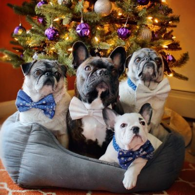 Pug-Owned Businesses: Tuesday's Ties