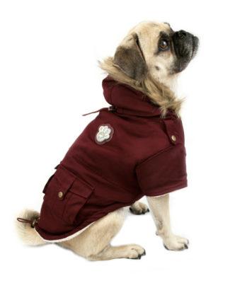 Winter Coats For The Pug - Pug Squad