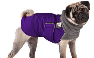 Winter Coats for Pugs