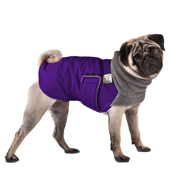 Winter Coats For The Pug Pug Squad