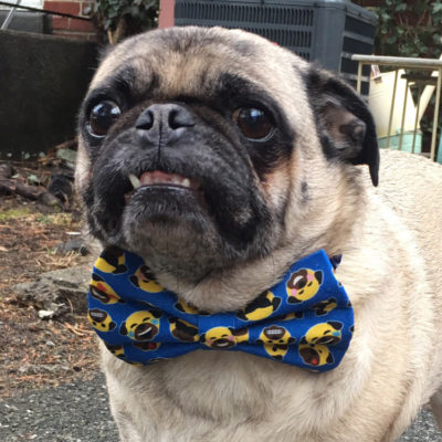 Emoji Bow Tie Fundraiser