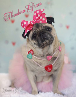 Featured Rescue: Green Mountain Pug Rescue