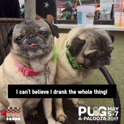 Pugapalooza at Wonder Bar